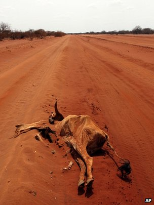 Dead animal in East African drought