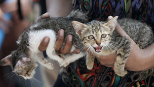 Cats rescued from a flooded temple in Ayutthaya province