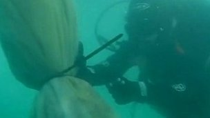 Diver tackles sea squirt problem