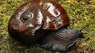 56656033 d39f7d24 c6b6 46b4 9f47 2c7cae5e27c2 - Mishap freezes to death 800 rare Newzealand snails