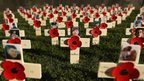 Field of remembrance with poppies and photos of service personnel