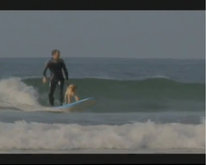 Mango the surfing dog