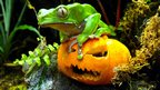 A frog on a pumpkin
