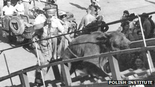 Wojtek being taken up a ship&#039;s gang plank. Photo courtesy of The Polish Institute and Sikorski Museum