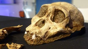 Skull cast (BBC)