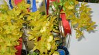 Cycnodes Taiwan Gold in display at the 20th World Orchid Conference, 18 November 2011