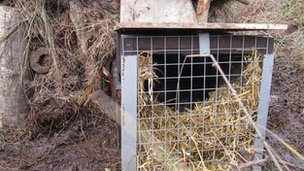 Beaver enclosure