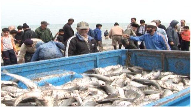 Fish caught in the Caspian Sea