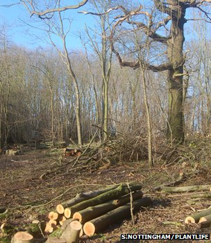Coppiced logs (Image: Sue Nottingham/Plantlife)