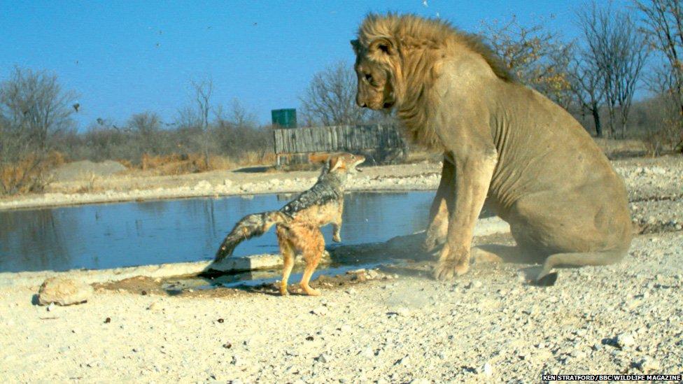 Pictures: Secret snaps of animals in the wild - CBBC Newsround