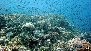 File image of coral off the Queensland coast