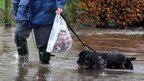 Dogs in flood water near Bridge of Allan