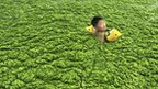 A boy swimming in algae covered sea