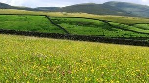Field at Kilnmire Ravenstonedale. Photo: Cumbria Wildlife Trust