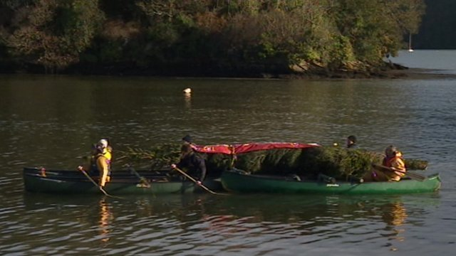 The Trelissick Gardens tree travelled by canoe