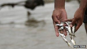 A man collects fish from the Mekong River in Phnom Penh on 8 December 2011