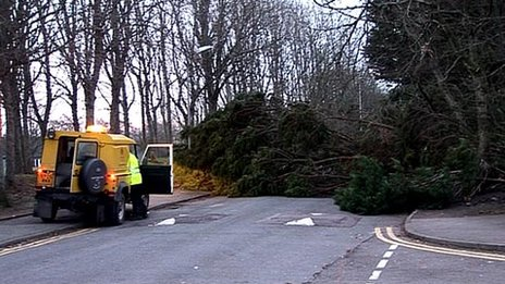 Tree down in Aberdeen