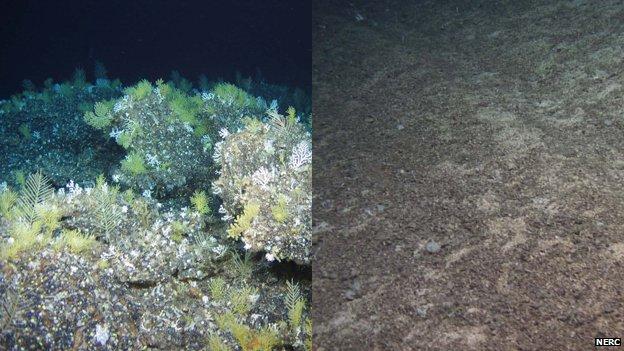 Pristine and fished seamount habitats compared (c) Nerc