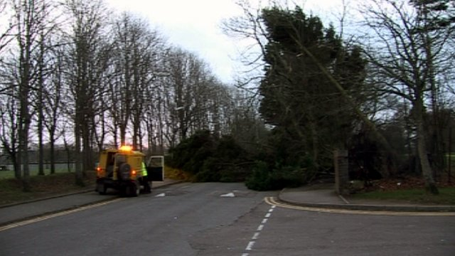 A fallen tree blocks a road