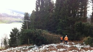 Two tree cutters clear damaged power lines near Pitlochry