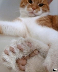 Daniel, a cat with two extra toes on each of his feet, 17 November 2011