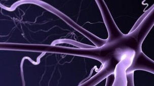 Motor neurones