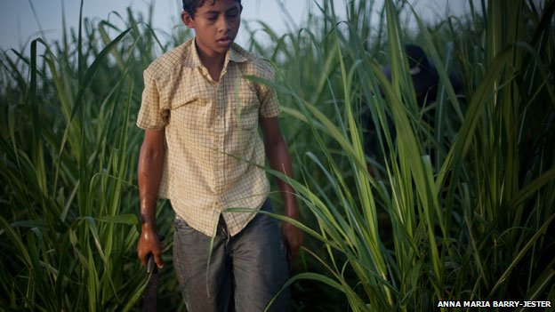 Boy in sugar cane fields, Nicaragua