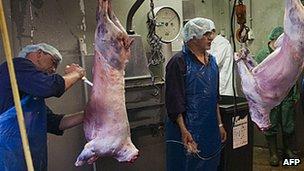 Halal abattoir in Oudeschoot, Netherlands