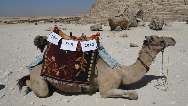 Camel at the pyramids with the words twin for 2012 across its saddle
