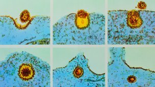 A virus entering a cell