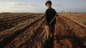 North Korean boy working a crop field