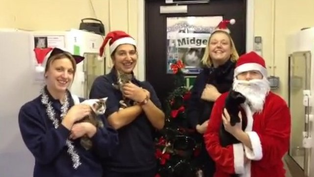 Staff and cats in the video. Photo: RSPCA