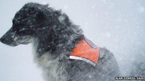 Dog Chester in snow. Pic: Alan Dennis/SAIS