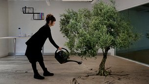 Olive Tree from Larissa Sansour's Nation Estate project
