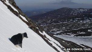 Chester on a hillside. Pic: Alan Dennis/SAIS