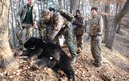 Team working on an Asiatic bear in Russia (c) Wildlife Vets International