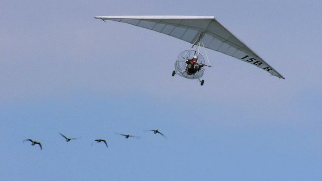 Christian Moullec flies with geese