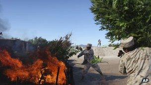 Soldiers burn marijuana plants at the largest marijuana plantation ever discovered in Mexico, near San Quintin, Baja California state - July 2011