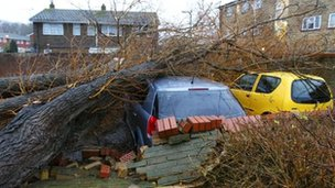 Trees on car in Havant