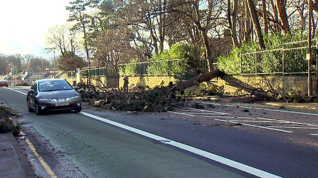 A tree partially blocks a road in Edinburgh