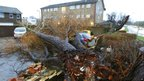 A tree rests on three cars in Havant, Hampshire