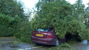 Tree on car in Shenley, Hertfordshire