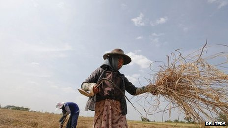 Farmers work in a rice field in Dala township, near Yangon, November 23, 2011