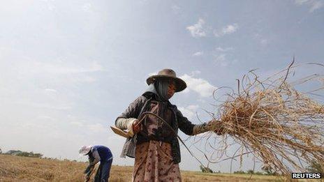 Farmers work in a rice field in Dala township, near Yangon, November 23, 2011