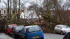 Trees down in Glasgow