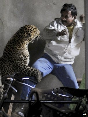 Wild leopard attacks man in Gauhati (07/01/12)