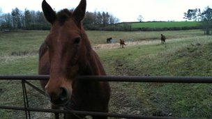 Horse at Mixbury