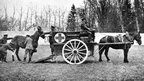 A Blue Cross horse ambulance at work in France during the World War I.