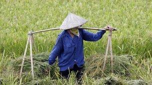 Vietnamese farmer (file image)