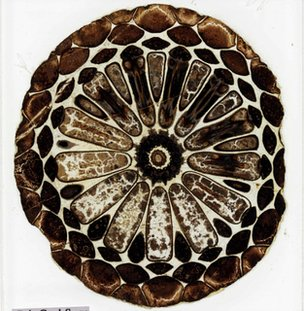 Darwin fossils found